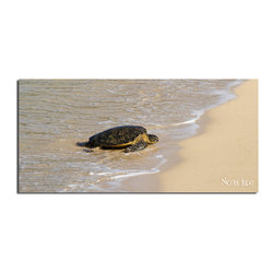 """READY2HANGART.COM - Nicola Lugo 'Baby Sea Turtle'  20x40-inch Canvas Wall Art - Renowned Surf Photographer Nicola Lugo, takes you behind the lens of his travels worldwide. This photograph is offered as part of a limited """"Home Decor"""" line, being the perfect addition to any living or work space."""