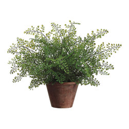Silk Plants Direct - Silk Plants Direct Maidenhair Fern (Pack of 6) - Silk Plants Direct specializes in manufacturing, design and supply of the most life-like, premium quality artificial plants, trees, flowers, arrangements, topiaries and containers for home, office and commercial use. Our Maidenhair Fern includes the following: