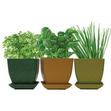 Contemporary Plants by Urban Farmer