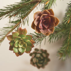 Viva Terra - Succulent Ornaments (set of 3) - Whether hung on a holiday tree or elsewhere,these diverse succulents are greatconversation pieces. We gave these cacti-familymembers a chance to show theirstuff in the dead of winter, and theyresponded splendidly. They last for manyweeks as living ornaments, and then canbe planted in soil to enjoy for years tocome. A care guide is included. INDIVIDUAL ORNAMENT (variety selected at timeof shipment), SET OF 3 (one of each variety shown)