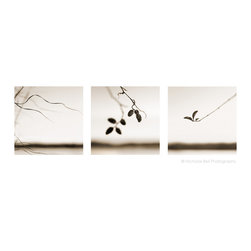"""""""Minimalist Nature Print"""" Set Artwork - Minimalist Nature Print Set.  Three individual 10 x 10 prints.  Printed with borders.  Archival pigment prints on Canson Baryta Photographique Paper, a museum quality paper with a satin finish.  Signed, dated and numbered on the back.  Ships flat and is carefully packaged for protection."""
