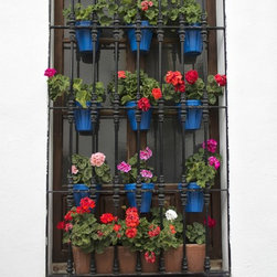 Geraniums in Spain Artwork - Pots of colorful geraniums hang within a wrought iron window grate in Spain.