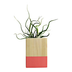 Coral/Wood Air Plant Planter With Tillandsia Bulbosa - Natural wood and summer coral colorblock air plant cube. This handmade cube will arrive with a tillandsia bulbosa. Simple and modern. Care instructions included.
