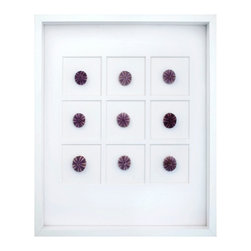 Purple Sea Urchin Shadowbox - Petite purple sea urchins, gifted by the sea, invoke a wonder inspired by their jewel-like beauty and the fact that no two are exactly alike. The Small Purple Sea Urchin Shadowbox artfully presents nine sea urchins on a white matboard that accentuates their unique hue. The white wood frame surrounding the glass completes the sophisticated and monochromatic tone of the background.