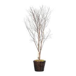 Vickerman - 6' Winter Birch Deluxe - 6' Winter Birch Deluxe Tree in dark brown rattan basket with American made excelsior.