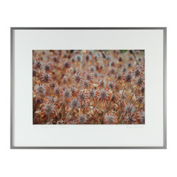 Lost Art Salon - Essaim Safran (Saffron Coterie), Mendocino 2012 Original - Do you ever feel like you want to lay in a field of wild flowers? Well, lose yourself in this photograph of dried saffron blooms by contemporary artist, Gaétan Caron. The delicacy of this piece is balanced by the strength of the silver metal frame, and is truly stunning.