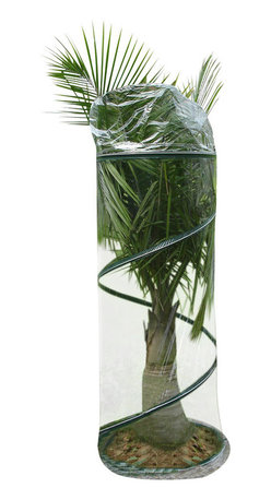Zenport - Pop Up Greenhouse 70x150cm - The Zenport SH3240E 6-Foot Portable Pop-Up Greenhouse protects Shrubs, small trees, bushes, plants, and garden from frost! Measures 27.5 x 72-Inches (70x180cm). Provides plants, fall, winter and Early Spring protection from harsh weather conditions. Spring construction makes it easy to set up without tools and great for summer storage when not in use. Folds flat in carry bag for storage. Includes metal stakes for anchoring in windy areas.
