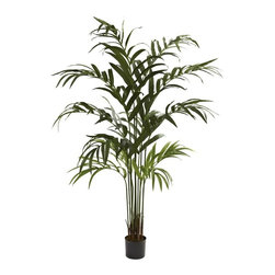 """6' Kentia Palm Tree - Palm trees come in many varieties, and this Kentia Palm Tree is amongst the most interesting. With several trunks standing almost impossibly straight giving way to cascading leaves, it projects an image of """"dignified beauty"""", while also radiating that warm, tropical feel. Perfect for either home or office, it also makes a great gift for that hard to buy for person. Height= 6 Ft. x Width= 30 In. x Depth= 30 In."""