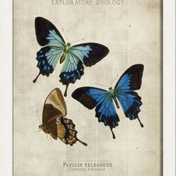 The Artwork Factory - Papilio telegouus Butterfly Framed Artwork - Ready-to-Hang, 100% Made in the USA, museum quality framed artwork
