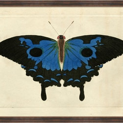 Wendover Art - Naturalists Moth Blue - This striking Giclee on Paper print adds subtle style to any space. A beautifully framed piece of art has a huge impact on a room for relatively low cost! Many designers and home owners select art first and plan decor around it or you can add artwork to your space as a finishing touch. This spectacular print really draws your eye and can create a focal point over a piece of furniture or above a mantel. In a large room or on a large wall, combine multiple works of art to in the same style or color range to create a cohesive and stylish space!