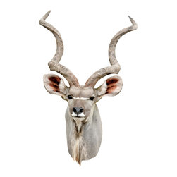 Walls Need Love - Greater Kudu Antelope Mount, Adhesive Wall Decal - Bring some African Savannah life into your home with the Greater Kudu Antelope Mount decal. A contemporary twist on the mounted trophy of yore, raise awareness on the species decline and enjoy the majestic image of this regal beast.