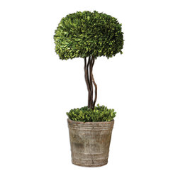 Uttermost - Tree Topiary Preserved Boxwood - Preserved while freshly picked, natural evergreen foliage looks and feels like living boxwood. Single topiary is potted in mossy stone finished terracotta planter. Bulbs Included: No