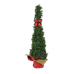 Frontgate - Slender Ivy Slender Cone in Holiday Wrap with Bow - Live ivy topiary. Arrives in holiday wrap. Expertly shaped and pruned. Let soil approach dryness before watering. Makes a lovely holiday gift. Arriving in joyful holiday wrapping and adorned with a matching red bow, our cheerful Ivy Slender Cone will create a festive ambiance that is perfect for the holiday season. Carefully hand-woven from specially chosen small-leaved and durable dark green ivy, this cone is lush and full. Ivy topiaries require minimal care, but prefer a bright location out of direct afternoon sun.  .  .  .  .  . Made in the USA. Note: This product cannot ship to Oregon.