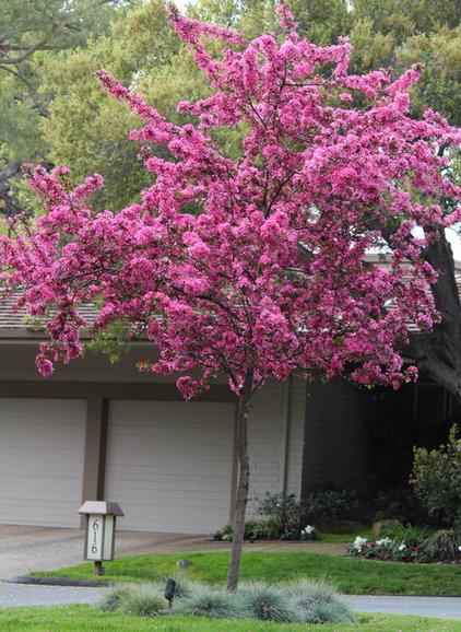 Zone 6 flowering trees 28 images zone 5 flowering for Flowering ornamental trees zone 5