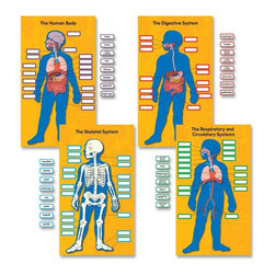 Carson-Dellosa - Carson-Dellosa Human Body Bulletin Board Set - 0.1 x 20 x 29.5 - Multicolor - Bulletin board set helps students learn about the parts of the body and the systems of the body. Use the 80 color-coded, detachable labels to identify the major organs, the digestive system, the skeletal system, and the respiratory and circulatory system. This 84-piece set also includes four body system charts (13-3/4 x 24) and a teacher resource guide. Human Body Bulletin Board set is designed for students in second through fifth-grade and ages 7 to 10.