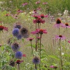 Pin by Marion Schuijt on Gardening | Pinterest