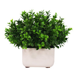 Boxwood Spray Arrangement in White Pot - This simple, but elegant piece is completed with boxwood spray grass in a clean, crisp white pot.