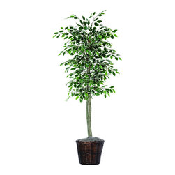 Vickerman - 6' Variegated Ficus Tree - 6' Variegated Ficus Tree with hardwood trunks, Brown Rattan Basket and American made excelsior.