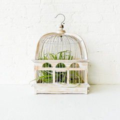 eclectic plants by Etsy