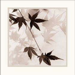 Amanti Art - Japanese Maple Leaves No. 1 Framed Print by Alan Blaustein - Alan Blaustein's print makes you feel like you're lying on the grass and gazing up at Japanese maple branches framed by the hazy sky. Hang it in your office so you can take an imaginary moment to transport yourself to the outdoors each day.