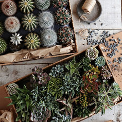 Succulents - Buy a flat of these low-maintenance plants to create a beautiful terrarium display or potted garden. They're long-lasting and great for those who are working on their green thumbs.
