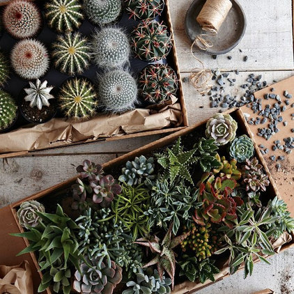 Traditional Plants by West Elm