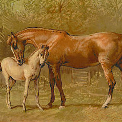 Buyenlarge - Thoroughbred Mare and Foal 24x36 Giclee - Series: Horses - Riding & Racing