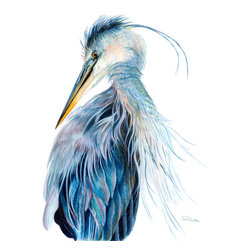 Allison Richter Wildlife Studio - Blue Heron - Artist Print for Wall  - Watercolor Paper Print 20h' x 16w' - Your home décor isn't just décor, it's items you choose from your heart that speaks to you. Whether you're choosing prints for your home, office, or resort, you know when you've found the perfect southern coast piece . Add your personal style to your life for enjoyment and conversation starters with this wonderful Blue Heron artist signed bird print.