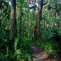Path Through The Oaks. Highlands Hammock. -