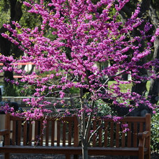 Practical spring-flowering trees