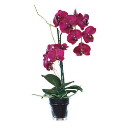 Jane Seymour Botanicals - Phalaenopsis Orchid in Glass Pot - If only everything that looked this high-maintenance was actually so maintenance-free. This gorgeous Phalaenopsis orchid in fuchsia is every bit as dazzling as the real thing, but without the incredibly fussy and demanding nature. This superb orchid in a glass pot can be placed nearly anywhere to add an elegant color splash to your home.