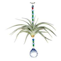 Spirit Pieces - Air Plant Ornament with Blue Crystal Suncatcher and Swarovski Crystal Butterfly - This wonderful gift to your yourself or others is a living breathing Tillandsia Air Plant.  The blue crystal sphere sun catcher will sparkle in any window or off of an awning.