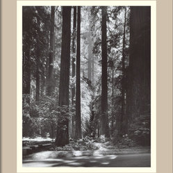 """Redwoods, Founders Grove, 1966"" Framed Print by Ansel Adams"