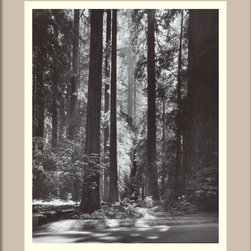 "Amanti Art - ""Redwoods, Founders Grove, 1966"" Framed Print by Ansel Adams - Bough wow. This awe-inspiring print of giant redwoods reflects the majesty of these trees and the brilliant artistry of an American icon, Ansel Adams. It's printed on fade-resistant paper, which means that you can visit and revisit this magical forest for years to come."