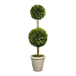 Uttermost Two Sphere Topiary Preserved Boxwood - Natural evergreen foliage preserved while freshly picked, looks and feels like living boxwood. Double spheres arranged on wooden twigs, potted in a mossy stone finished terra cotta planter. Natural evergreen foliage preserved while freshly picked, looks and feels like living boxwood. Double spheres arranged on wooden twigs, potted in a mossy stone finished terracotta planter.