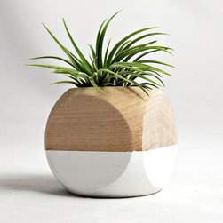 Cube Planter in White - Color blocking isn't just for people; plants can get in on the action as well. Crafted specifically for air plants, this cube planter has been hand-painted with a striking white paint for look that is both rustic chic and modern. Each planter comes with a single Tillandsia ionantha plant that blushes a pleasant reddish pink in bloom.
