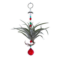 Spirit Pieces - Living Air Plant Ornament - A lovely addition to any inside or outside local, this Tillandsia air plant has green, white and red beading with a red suncatcher.  This is the perfect ornament for anyone who likes plants.  Hang it in the kitchen window, door threshold,  or off an awning.  Mist daily.  Makes a perfect gift.