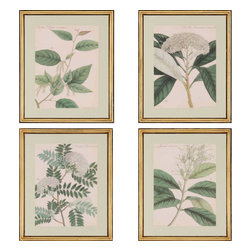 Paragon - Botanicals PK/4 - Framed Art - 3641 - Each product is custom made upon order so there might be small variations from the picture displayed. No two pieces are exactly alike.
