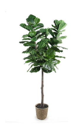 New Growth Designs - Fiddle Leaf Fig Tree - Forever green. This artful reproduction of a fiddle leaf fig tree offers wired branches for easy shaping and glossy lifelike green leaves. Towering to a stately 7-foot height, it will add a stunning presence to any room in your house.
