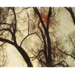 Transcendental I Canvas Print - Grandin Road