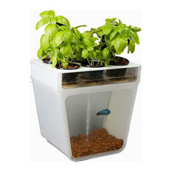 Home Aquaponics Garden - This Aquaponics garden kit is a closed-loop ecosystem that can sit right on your kitchen counter. Grow herbs or salad greens up top without worrying about watering or soil. Down below, watch pretty fish swim around.
