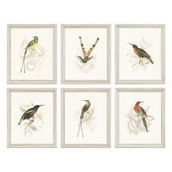 Paragon - Hummingbirds PK/6 - Framed Art - Each product is custom made upon order so there might be small variations from the picture displayed. No two pieces are exactly alike.