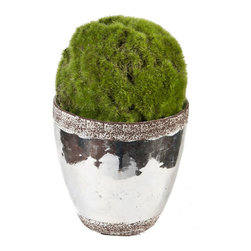 Creative Branch - Moss Ball in ceramic container - Quality Product