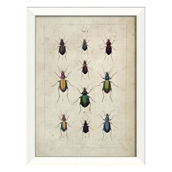 The Artwork Factory - Beetle Study III Framed Artwork - Ready-to-Hang, 100% Made in the USA, museum quality framed artwork