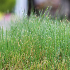 California Gardener's Checklist for September