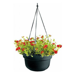Bloem - Bloem 12in Dura Cotta Hanging Basket Black DCHB12-00 - Plastic planters offer affordable beauty without heavy weight or risk of breakage.