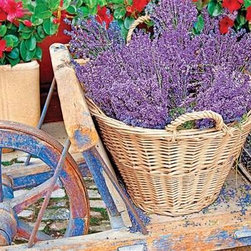 Basket of Lavendar Puzzle - 1000 Piece Jigsaw PuzzleYou can take a trip to the market towns of Provence with these baskets of tied lavender and boxes of small, scented flowers. A rustic scene popping with color and fine detail makes this puzzle delightful as well as a good challenge.