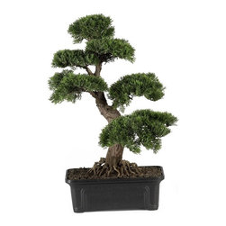 """Cedar Bonsai 24"""" Silk Plant - Treasure the beauty of this highly detailed Cedar bonsai. With soft leaves and a partially-exposed root system, this captivating two foot tall tree is sure to catch your eye. Situated in a rectangular shaped planter filled with artificial dirt, it's the ideal size for an office or small living space. Both friends and family will be delighted to receive this enchanting tree as a gift for any occasion. Height= 24 in"""