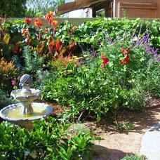 Traditional Landscape by H2 XERO Landscape design irrigation management