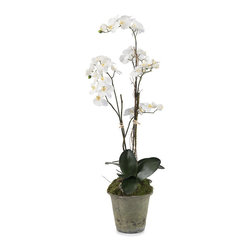 Frontgate - Garden Phalaenopsis II Wall Art - White phalaenopsis. Curly bamboo. Arrives in an aged garden pot. Designed for indoor use. Use in a home or office for a natural look. Elegant and understated, the Garden Phalaenopsis II is certain to be a lovely fixture for even the most refined of environments. Delicately plotted in an aged garden pot, this lifelike plant imparts an ethereal beauty.  .  .  .  .  .